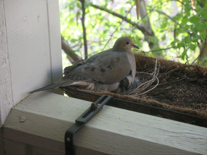 Rsz_balcony_birds_4-11-10_1